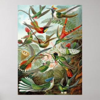 Verschillende Verscheidenheden van Kolibries Poster