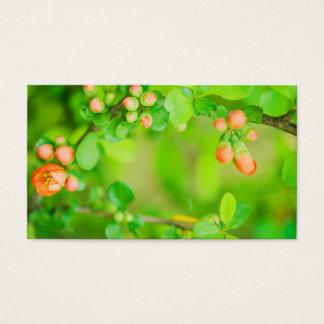 Verse groene en rode bloemen