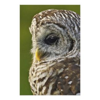 Versperde Uil, Strix varia, Michigan Fotoafdruk