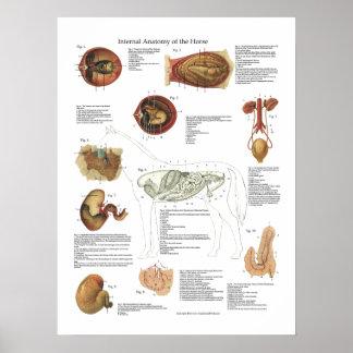 Veterinaire Grafiek van de Anatomie van de Organen Poster