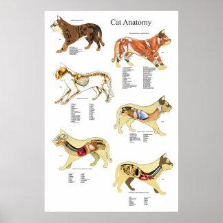 Veterinaire Grafiek van de Anatomie van het Orgaan Poster
