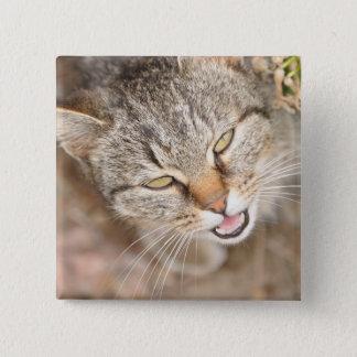 Vierkante knoop - kenmerkend dit zoete kat vierkante button 5,1 cm