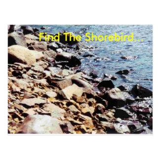 Vind Shorebird… Briefkaart