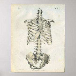 Vintage Anatomie van AsSkelet Poster