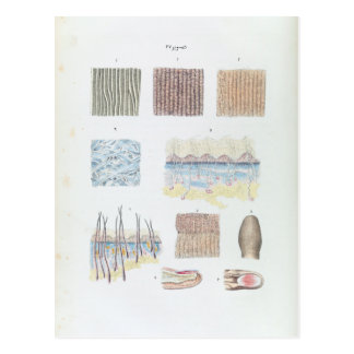 Vintage Anatomie van de de Huid en Spijkers van Briefkaart