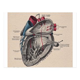 Vintage Anatomisch Hart Briefkaart
