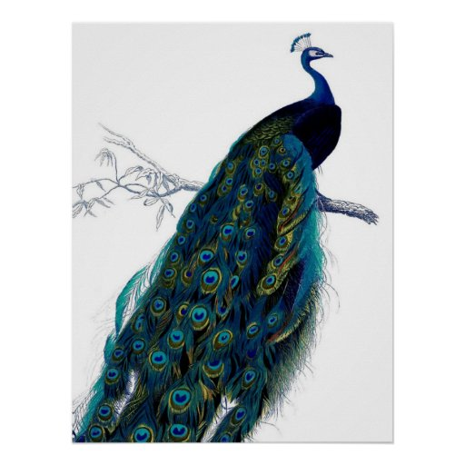 Vintage Blauwe Elegante Kleurrijke Pauw
