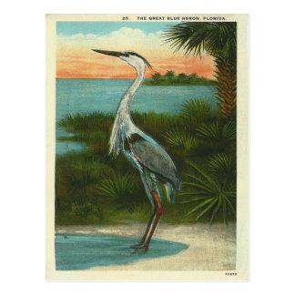 Vintage Blauwe Reiger Florida Briefkaart