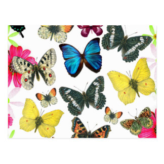 Vintage Blauwe Rode Gele Kleurrijke Vlinders Wenskaarten