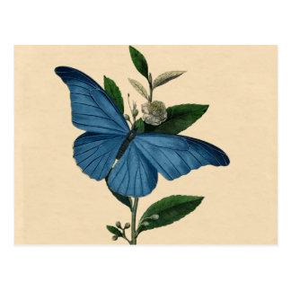 Vintage Blauwe Vlinder Wens Kaart
