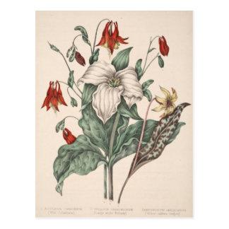 Vintage Botanisch Art. Briefkaart