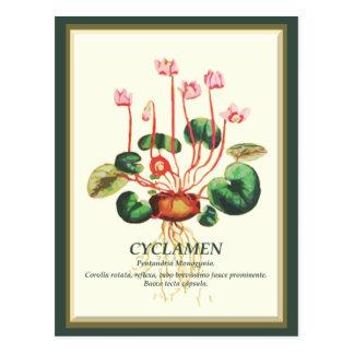 Vintage Botanisch de bloemart. van de Tuin van de Briefkaart
