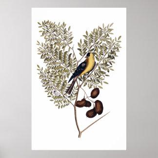 Vintage botanisch met gele vogel poster