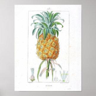 Vintage Botanisch Poster - Ananas