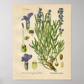 Vintage Botanisch Poster - Lavendel