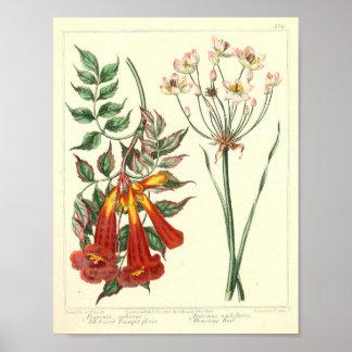 Vintage Botanisch Poster - Wilde Bloem