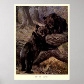 Vintage Bruin draagt schilderend (1909) Poster