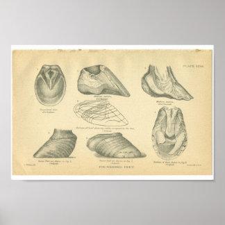 Vintage de Ingestorte Voeten van de Anatomie van Poster