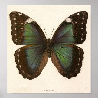 Vintage dierlijk-insect-vlinder-Specimen Poster