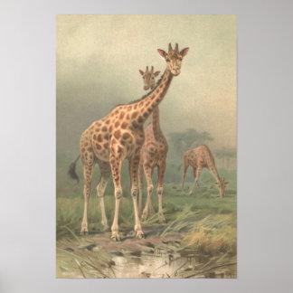 Vintage Giraf 1894 de Afrikaanse Vlaktes van de Poster