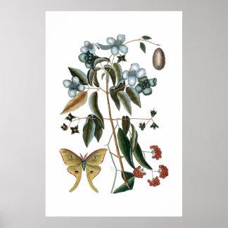 Vintage groen botanisch poster