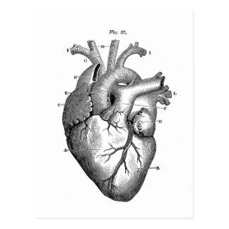 Vintage Klantgerichte Anatomie | van het Hart Briefkaart