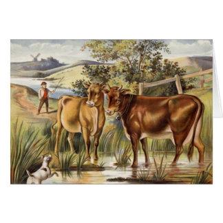 Vintage Koeien/het Wenskaart van het Weiland