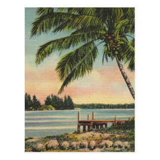 Vintage kokospalmen briefkaart