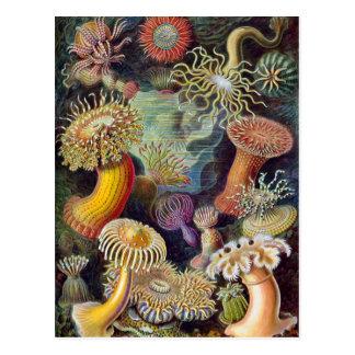 Vintage OnderwaterZeeanemonen door Ernst Haeckel Briefkaart