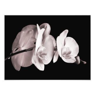 Vintage Sepia Wit & de Orchidee van Dendrobium van Foto Afdruk