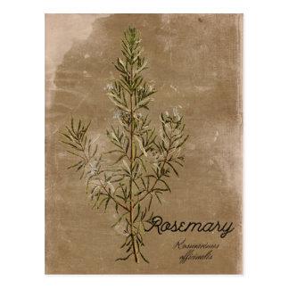Vintage Stijl Rosemary Herb Postcard Briefkaart