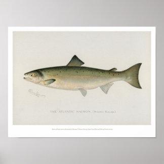Vintage Vissen - Atlantische Zalm Poster