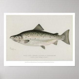 Vintage Vissen - Land Gesloten Zalm Poster