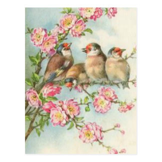 Vintage Vogels Briefkaart