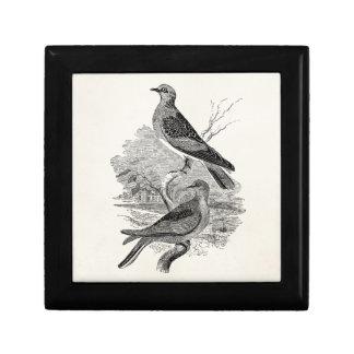 Vintage Vogels van de Duif van de Duiven van de Decoratiedoosje