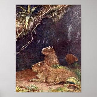 Vintage Wilde dieren, Capybara door Louis Sargent Poster