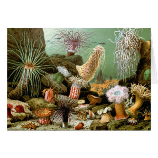 Vintage Zeeanemonen, de Mariene OceaanDieren van Kaart
