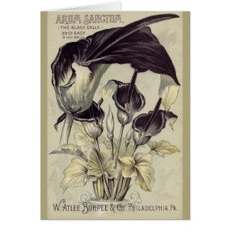 Vintage Zwarte Calla Lillies Wenskaart