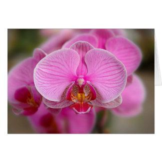Violette Orchideeën Briefkaarten 0