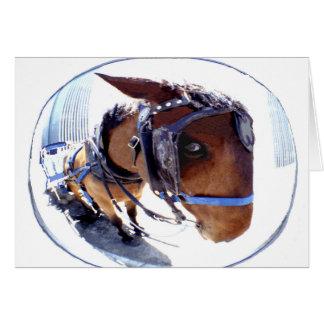 Vis-oog Paard en Vervoer Briefkaarten 0