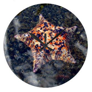 Vissen van de de klok de kleurrijke ster van de mu