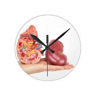Vlakke hand die model menselijke nier tonen ronde klok medium
