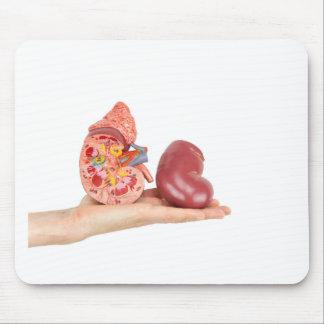 Vlakke hand die model menselijke nier toont muismat