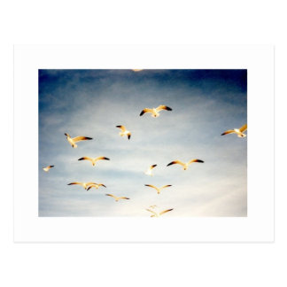 Vliegende Zeemeeuwen Briefkaart