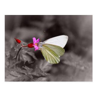 Vlinder op Roze Bloem Briefkaart