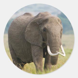 Voer het eenzame van de Olifant (Loxodonta Ronde Sticker