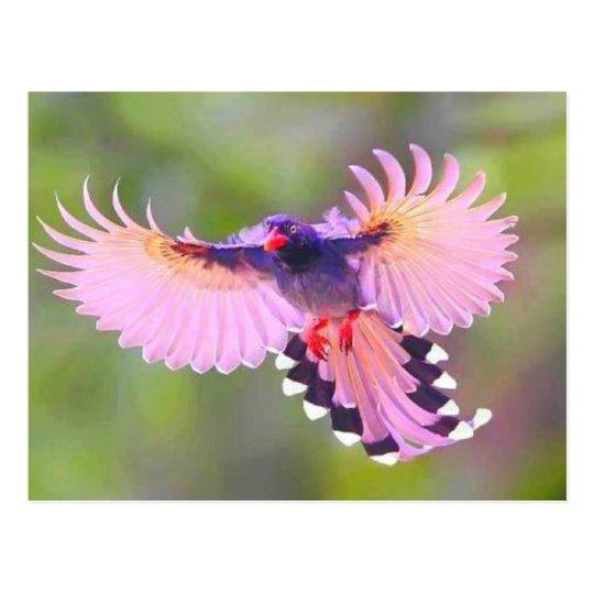 vogel briefkaart
