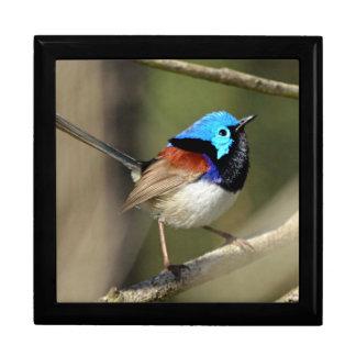Vogel - Geschakeerde Fairywren Decoratiedoosje