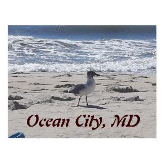 Vogel op het Briefkaart van het Strand