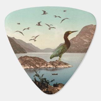 Vogelreservaat Plectrum